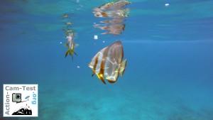 Fische_Seychellen_GoProHero4